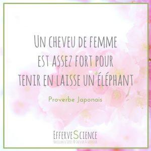 9-Un cheveu de femme est assez fort pour tenir en laisse en éléphant