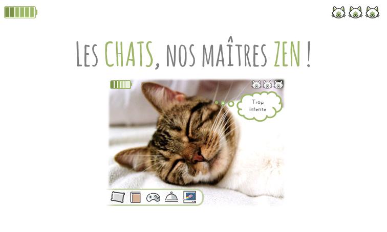 Les chats, nos Maîtres Zen