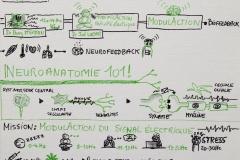 NBS Live 2018 Johanne Lévesque nous parle de neuroplasticité et de neurofeedback