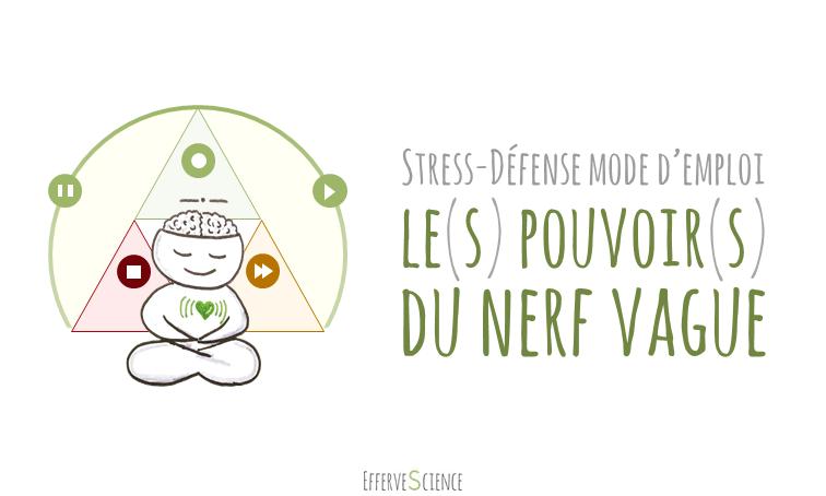 Stress-défense : le(s) pouvoir(s) du nerf vague